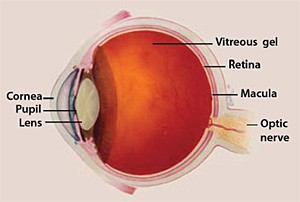 Diagram of Eye
